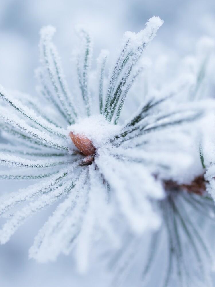 Hoarfrost on tree needles  by Juhku