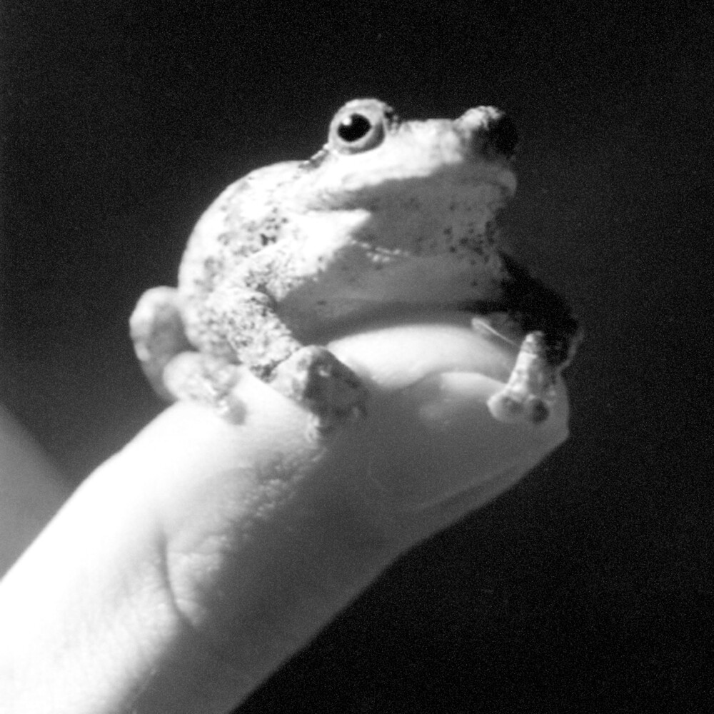 Frog and Thumb by Charlie Bookout