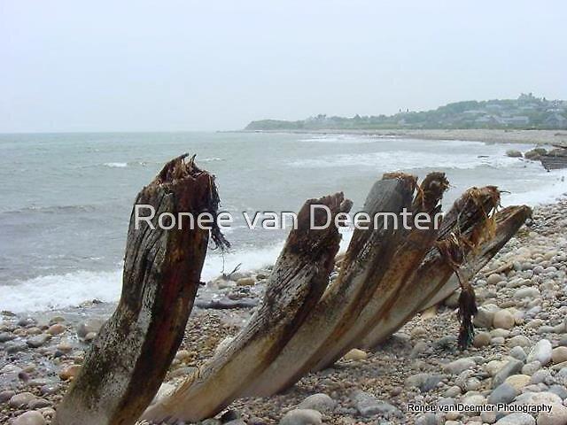 Wooden skeletons left on Cuttyhunk, MA by Ronee van Deemter