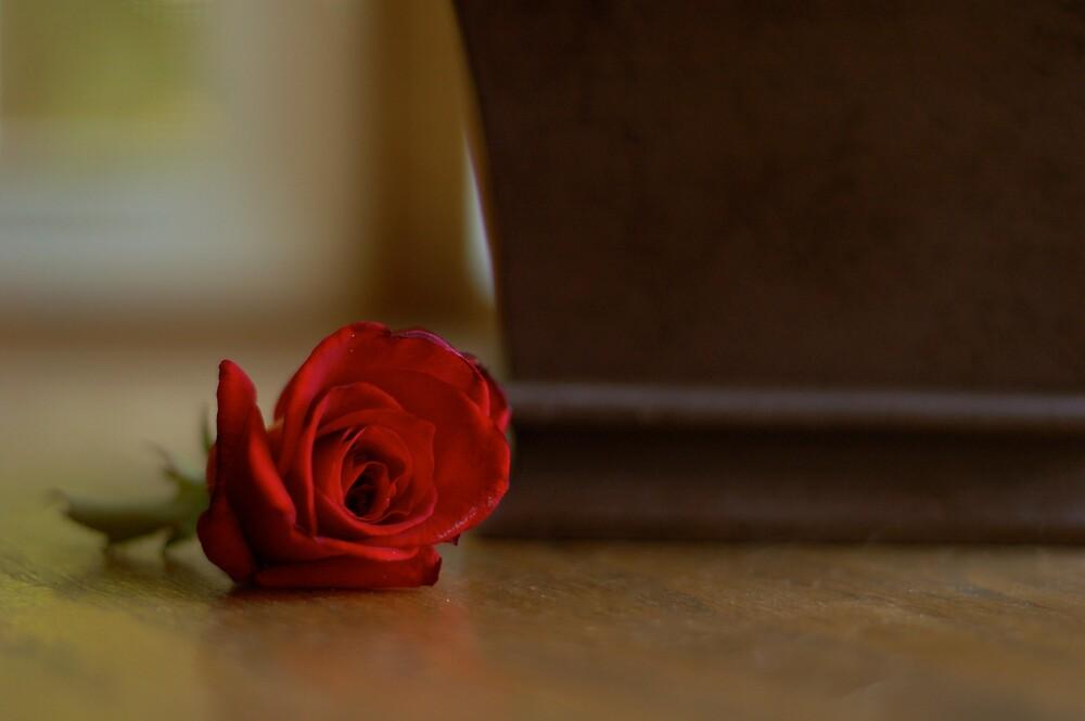 Rose by Brooke Triplett