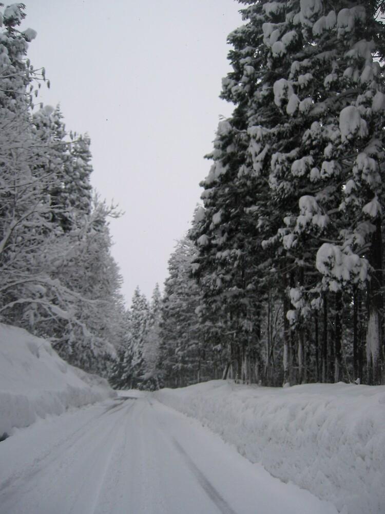 Snowy Road by profusemoose