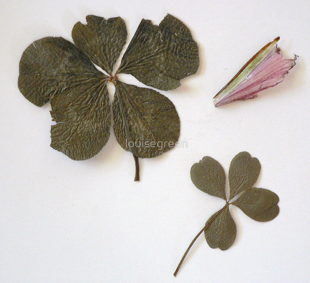 Five Leaf Clover & A Faerie's Wing (For Trudi) by louisegreen