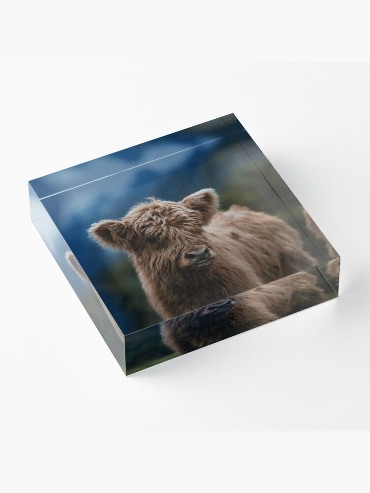 Alternate view of Baby Highland Cow Acrylic Block