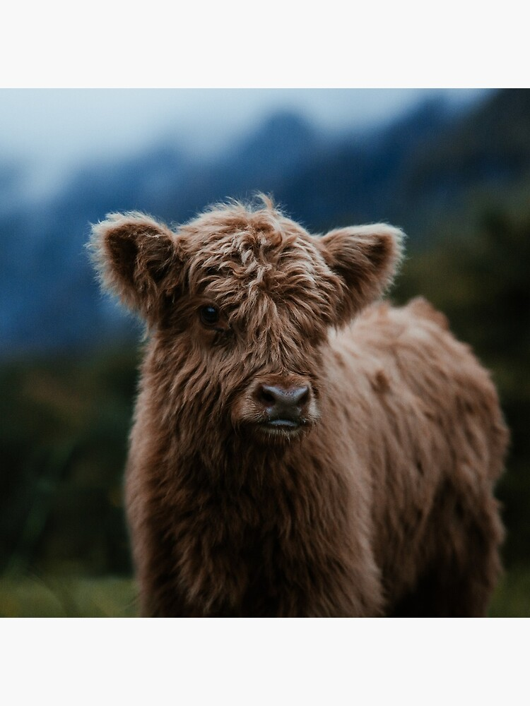 Baby Highland Cow by marinaweishaupt