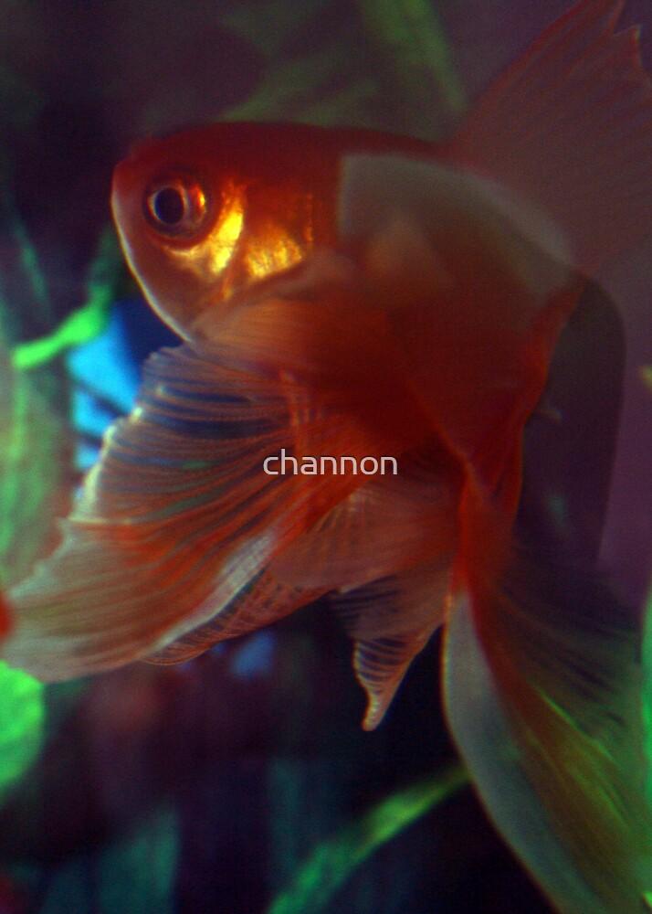 Flamenco Fish by channon