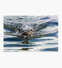 Otter swimming Photographic Print