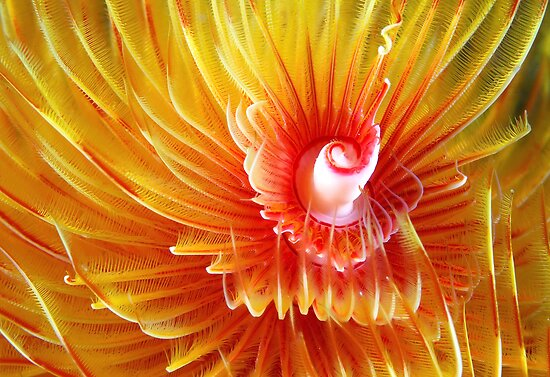 Full Bloom by MattTworkowski