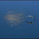 Gull by Gavin Brown