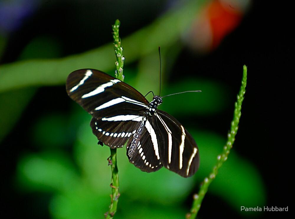 Zebra Longwing by Pamela Hubbard
