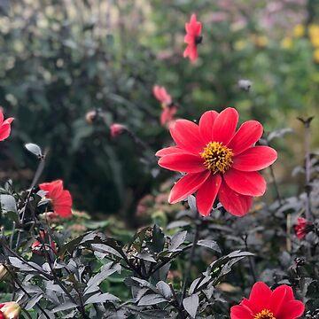Rote Blumen Foto von Rocket-To-Pluto