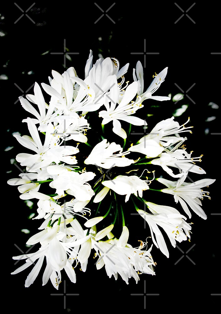 Garland of White by Catherine Hamilton-Veal  ©