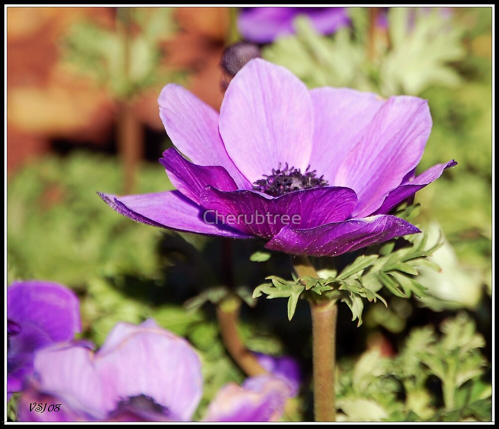 Purple Poppies: by Cherubtree