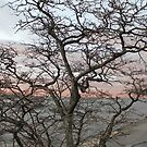 Sunset, pink clouds, exotic curved branches of a tree, beautiful view by znamenski