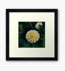 Happier Dahlia Framed Print