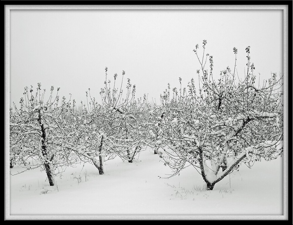 Orchard In The Snow by marchello