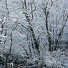 Winter's Frosty Beauty by Gillwho