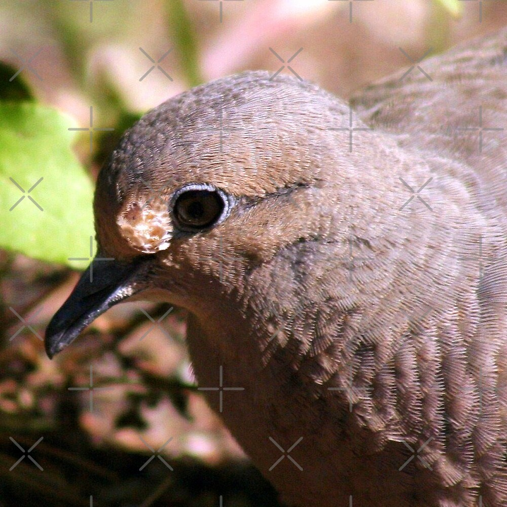 Mourning Dove by Julie's Camera Creations <><