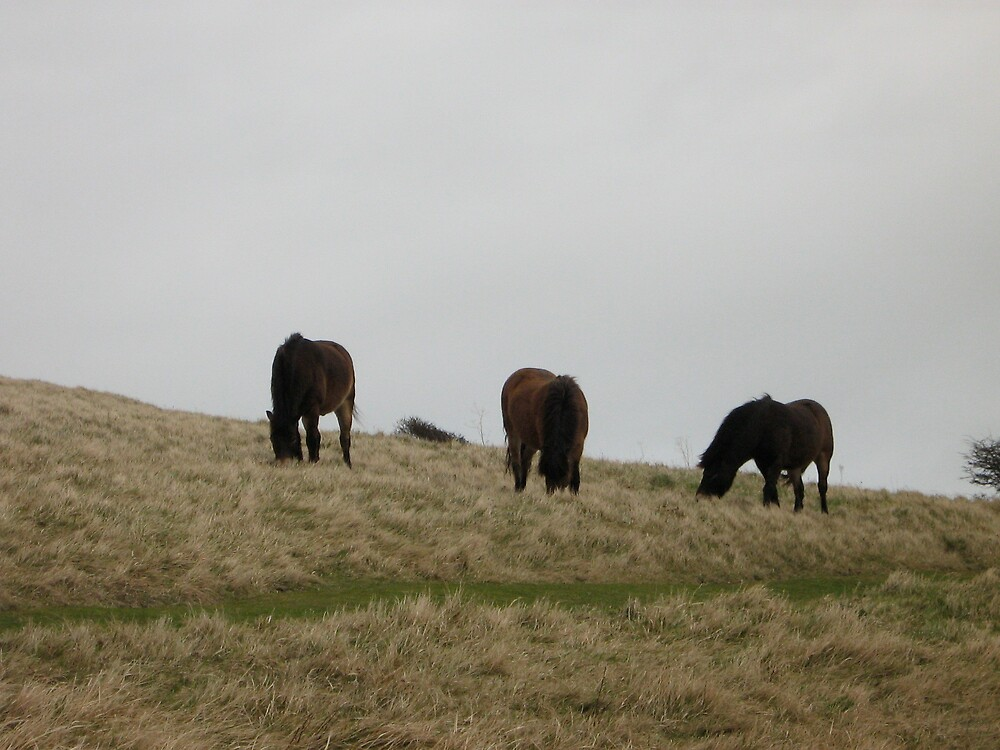 Dover Horses by profusemoose