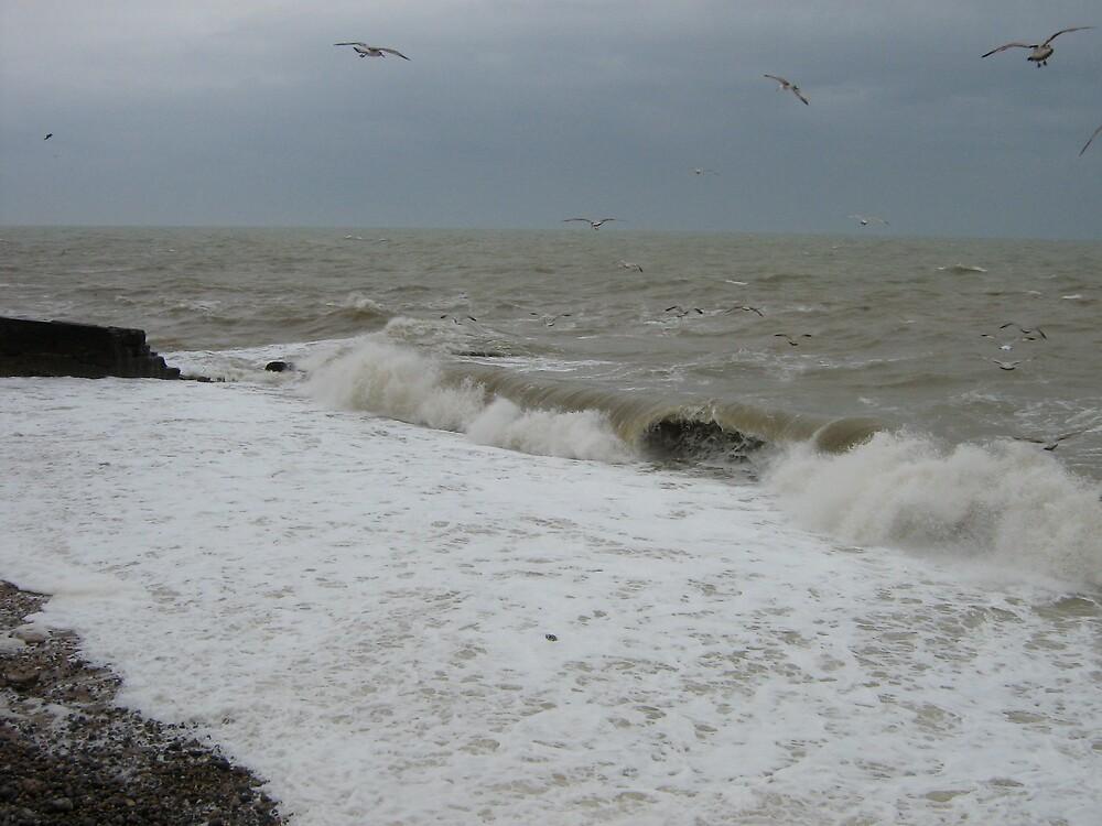 Gulls by profusemoose
