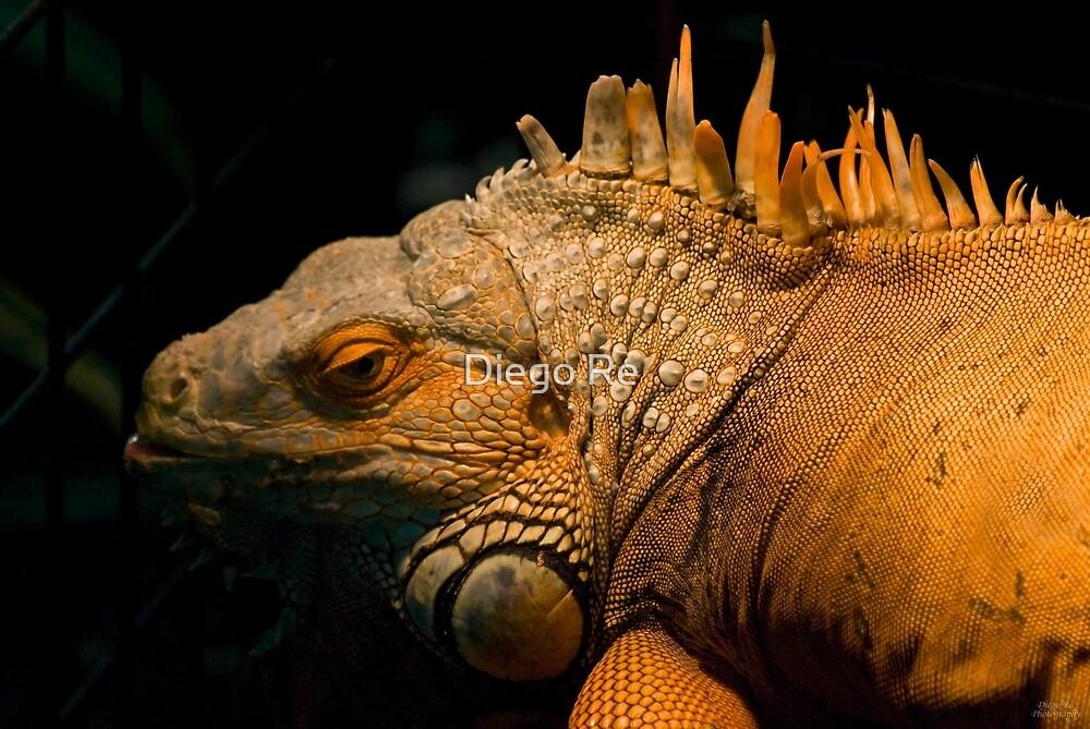 Iguana by Diego Re