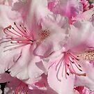 Pink Abundance by steppeland