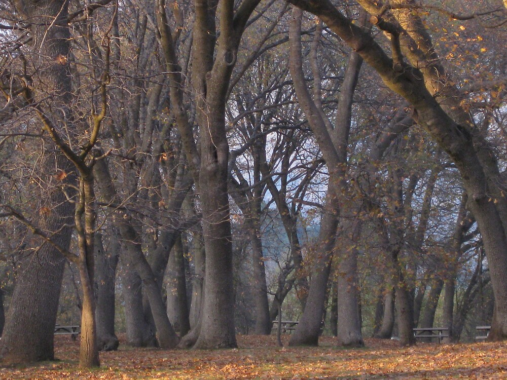 Oak Forest by Elizabeth McCoy