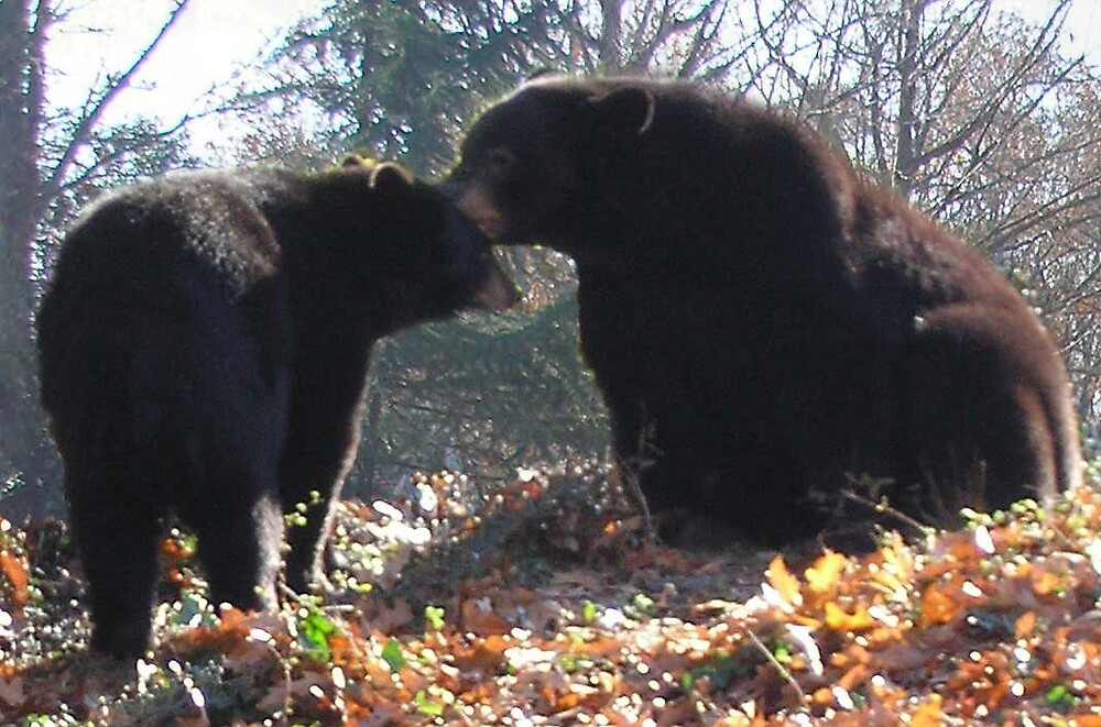 WHY I LIKE BEARS by PASSIONATE PLANET