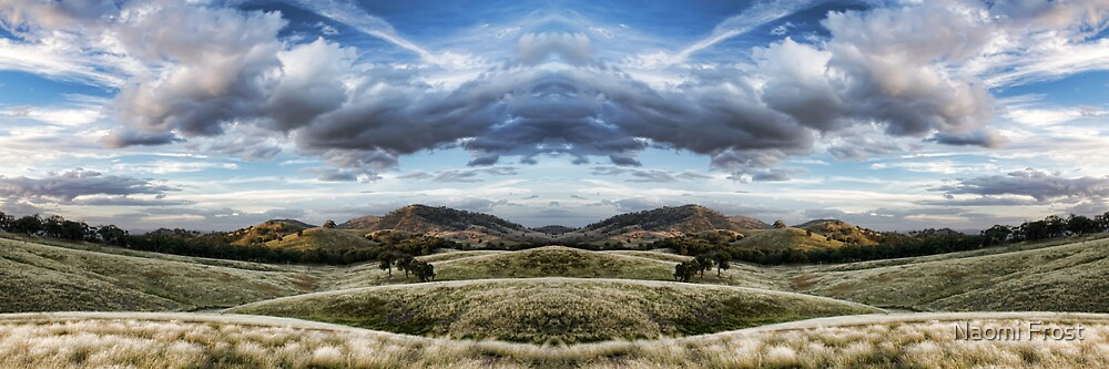 The Paddocks by Naomi Frost