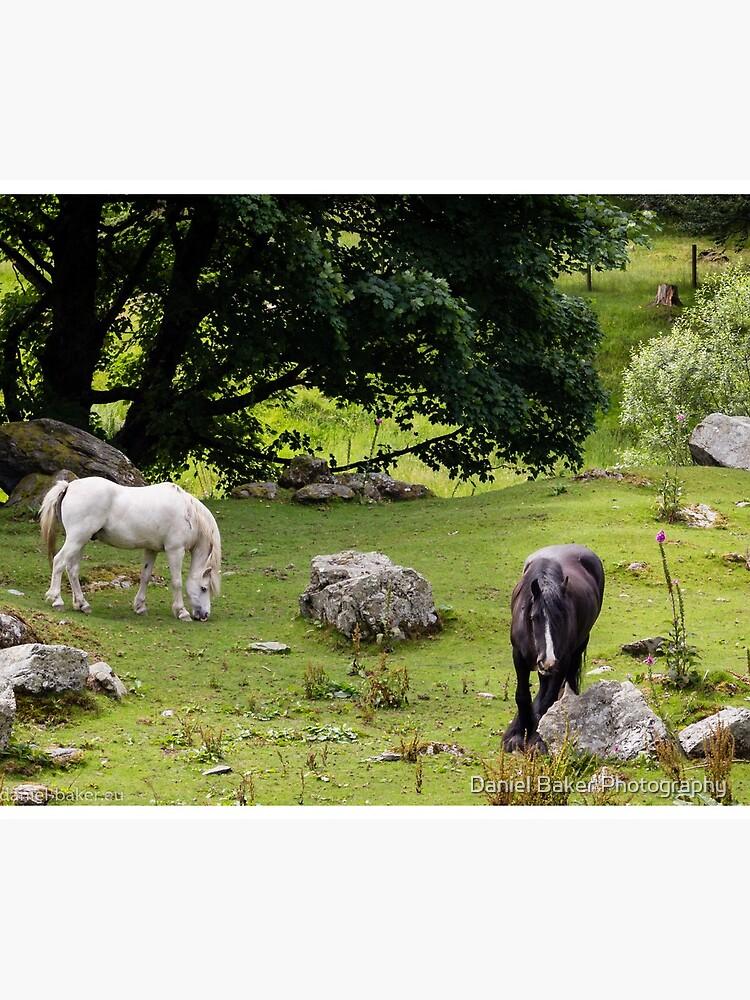 Mythical Horses by Daniel-Baker