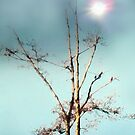 songbird ~ fleetwood mac & christine mcvee by gabryshak