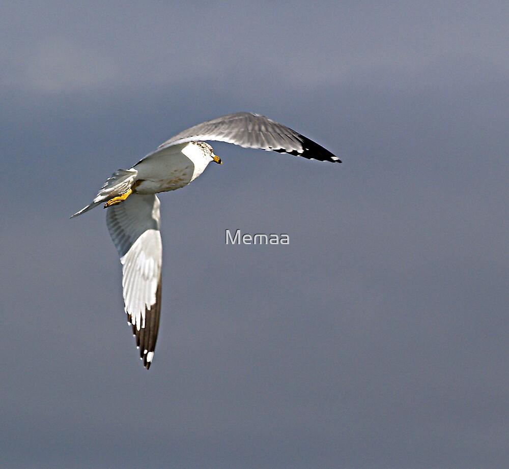 Sea Gull Turning In Flight by Memaa