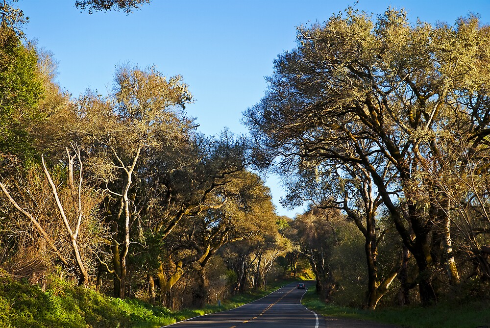 Live Oaks on the Bear Valley Road, Point Reyes, CA by MarkEmmerson