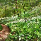 Trilliums in Bloom by Nadya Johnson