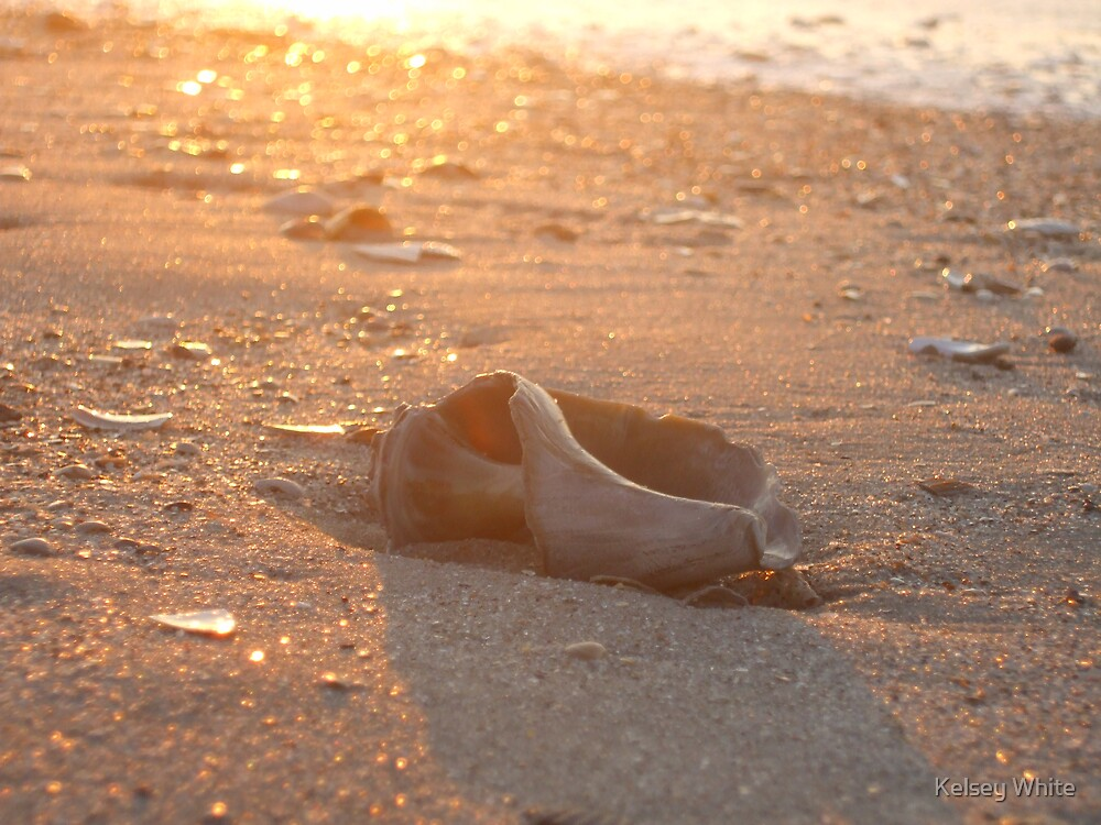 Shell In The Sunrise by Kelsey White