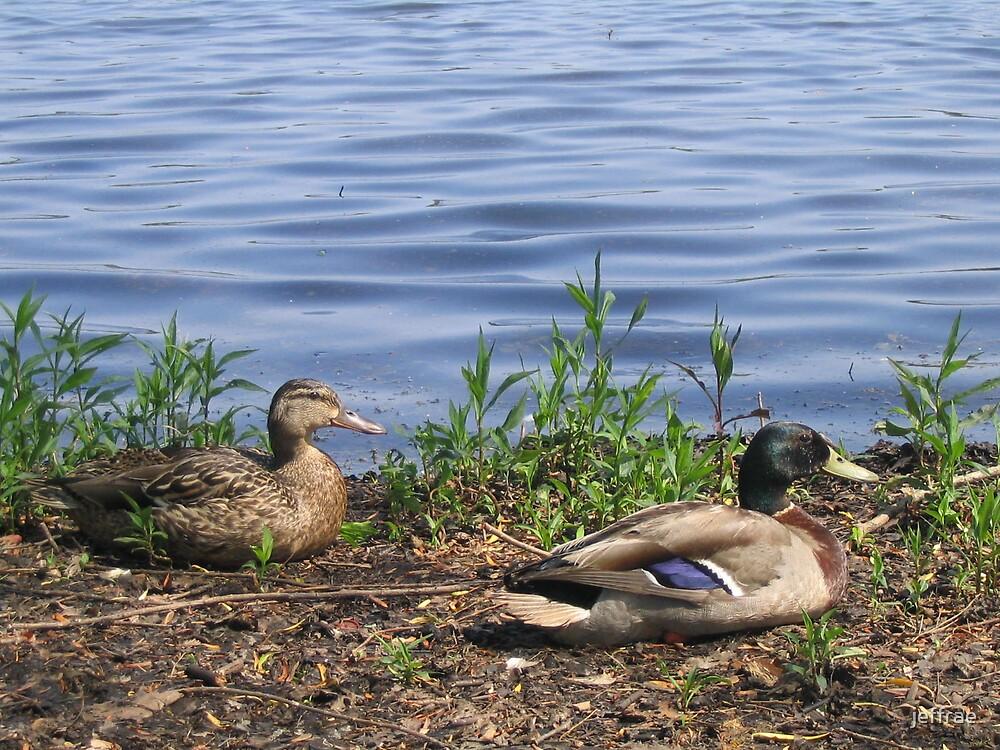 Feeling ducky by jeffrae