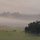 Morning Fog by Liz Worth
