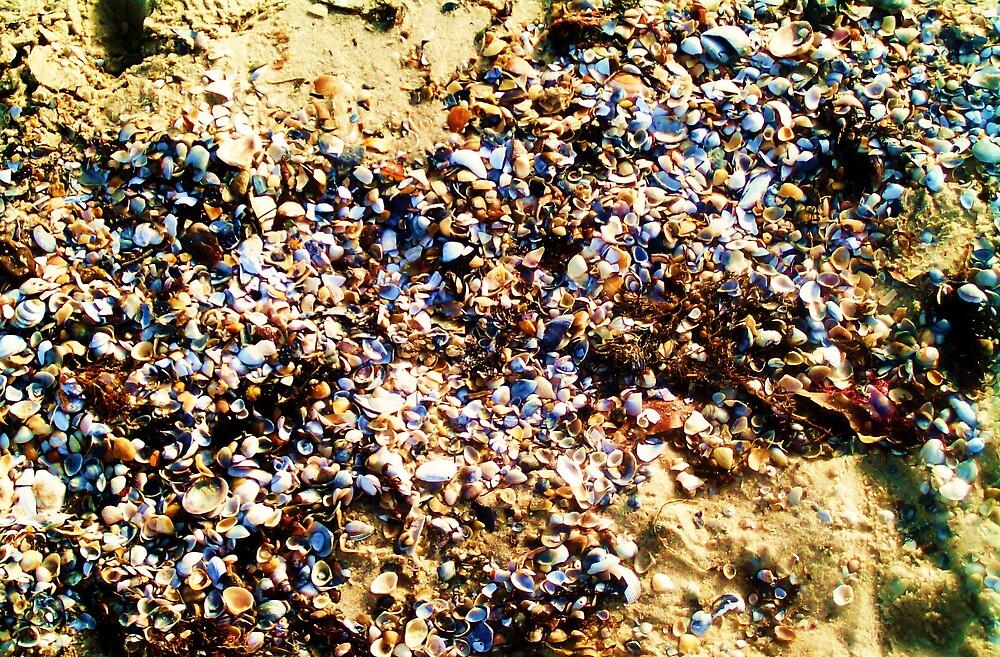 Shells by monica98