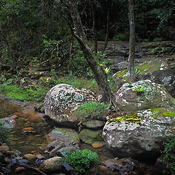 Rainforest Rocks by GeorgeP