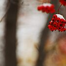 Red & white by Farras Abdelnour