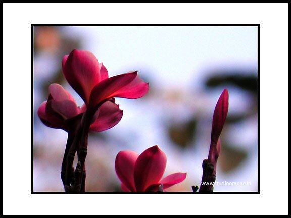 another pink_ by prasad nagnath