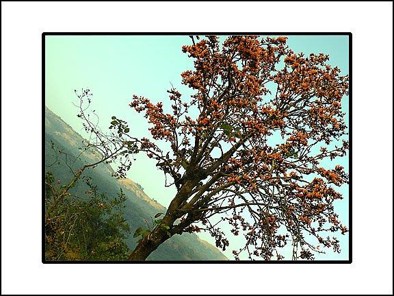 amazing tree by prasad nagnath