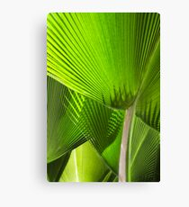 Palm fronds Canvas Print