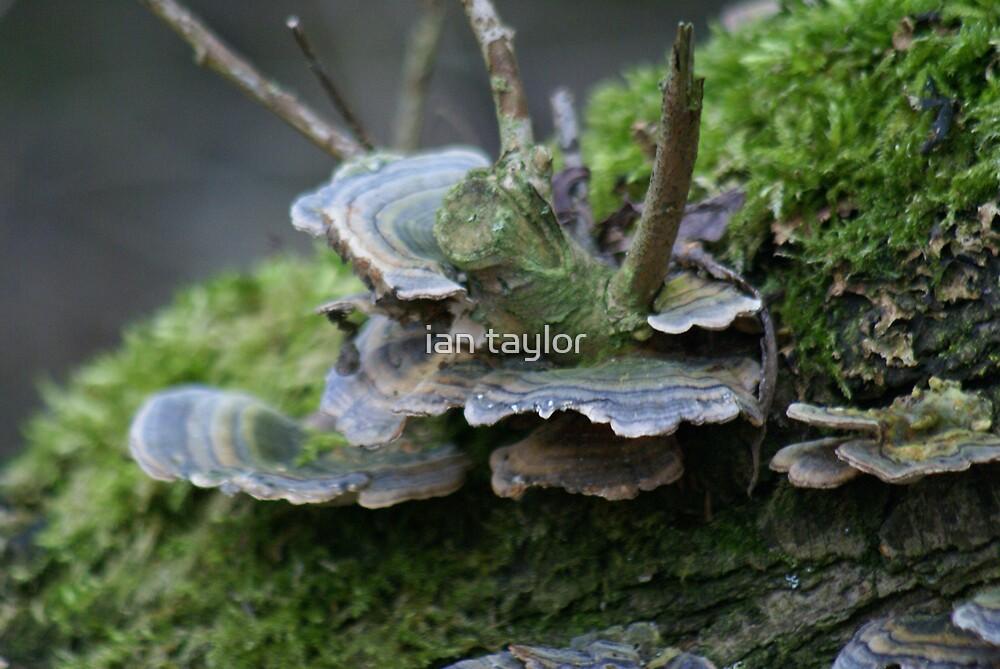fungi 2 by ian taylor