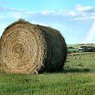 Rainbow's End by Brian R. Ewing