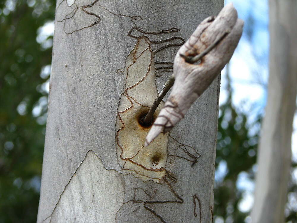 Scribbly bark by Kelly Simpson