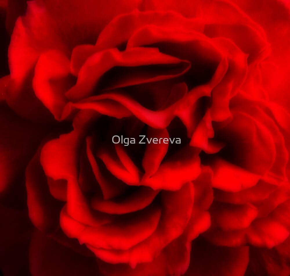 Fatal Rose of Red by Olga Zvereva