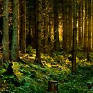 Spirit of Nature by Lars Klottrup