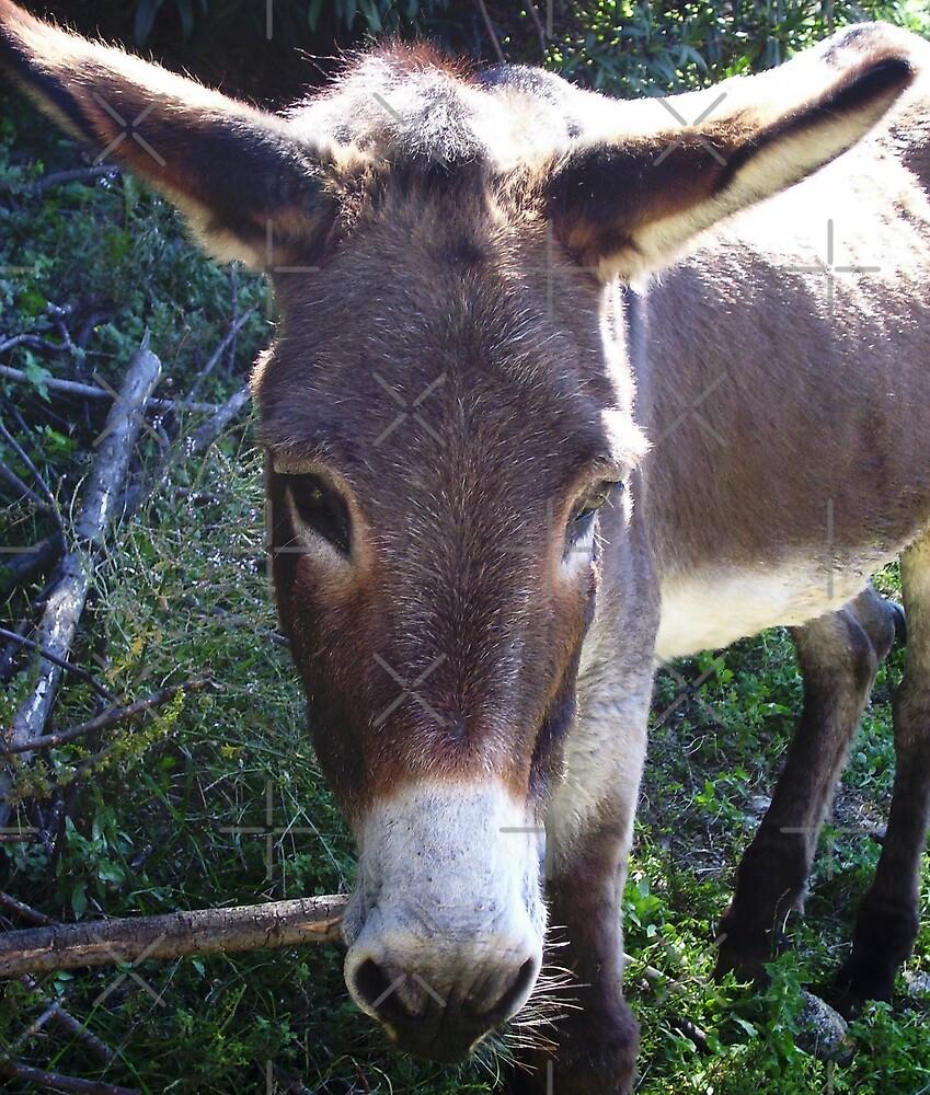 Donkey of Dafnata by fruitcake