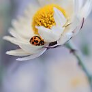 Ladybird and Daisy by AnnieD