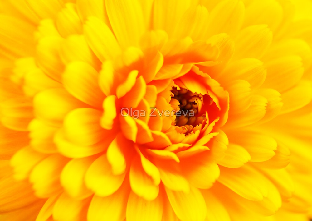 Yellow Beauty by Olga Zvereva